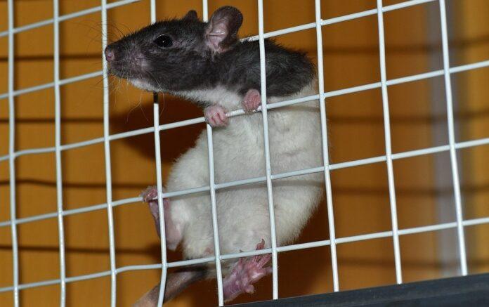 animal testing india