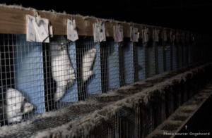 fur cruelty