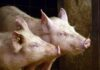 UK action plan for animal welfare